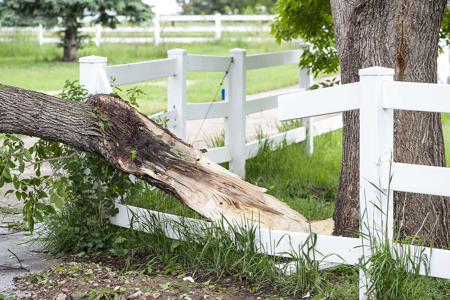 Fence-covered-by-insurance